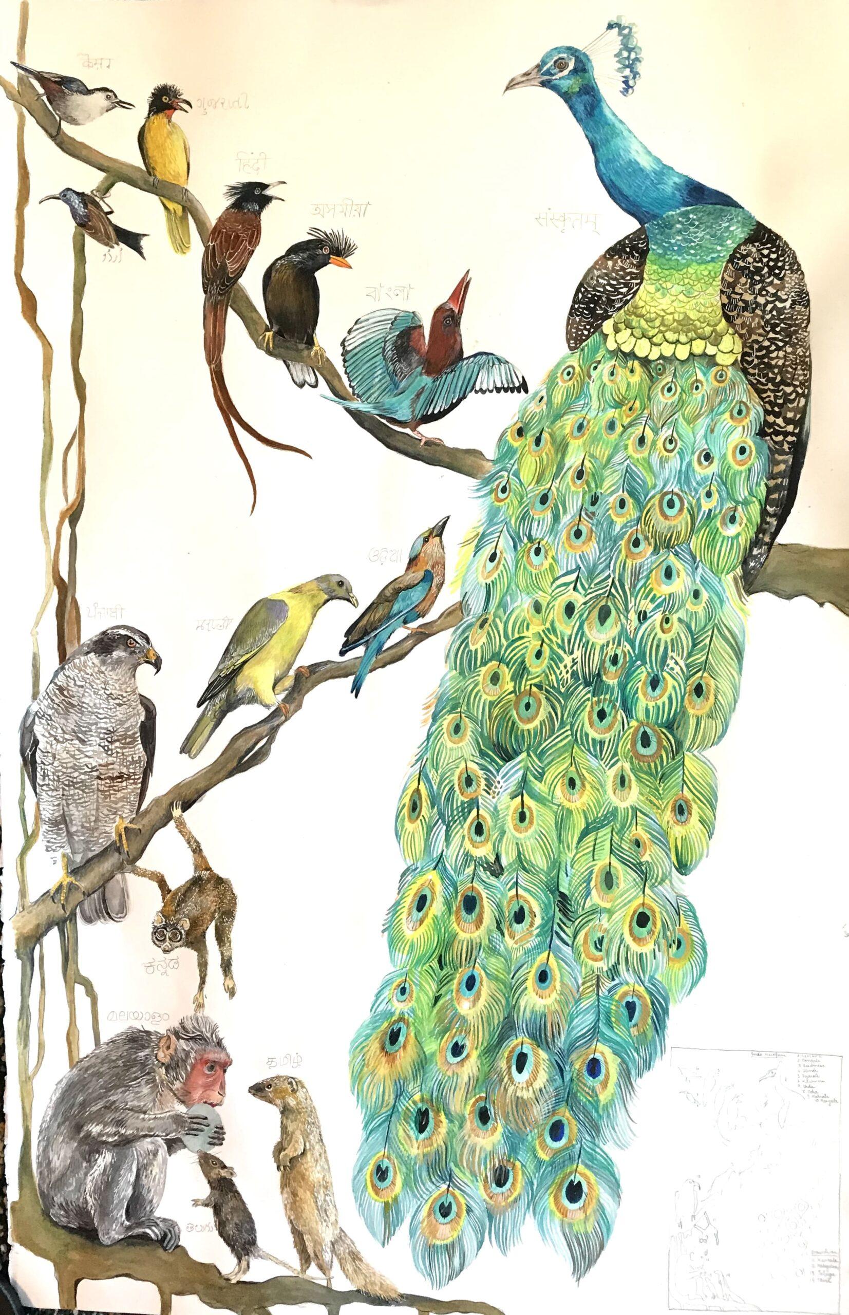 "Peacock. ""The Languages of India"" by Andrés Silva Vignoli"